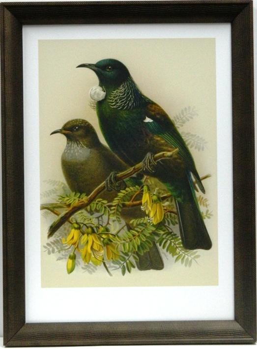 NZ Native Bird Tui