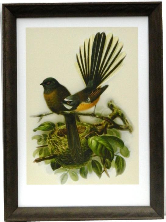 NZ Native Bird Fantail