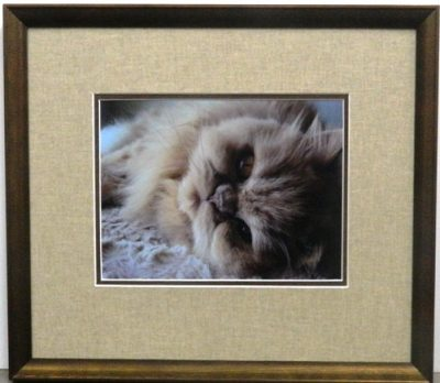 Persian Cat Photograph