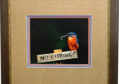 tripple Matted Kingfisher photo