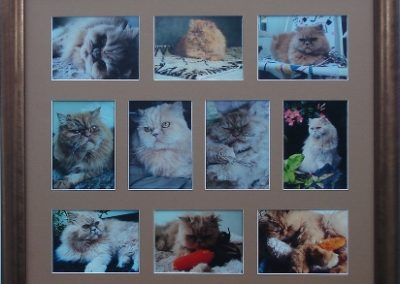 Framed Cat photos
