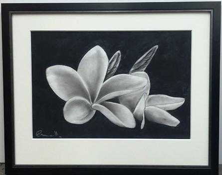 Charcoal drawing of Frangipani flower