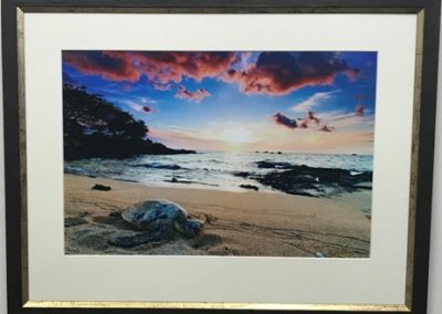 Turtle on the beach photograph